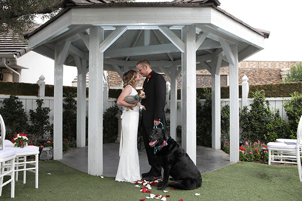 Dogs in Weddings | Weddings with Pets Photo Ideas