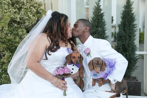 Dog Wedding Ideas | Dog Wedding Ideas