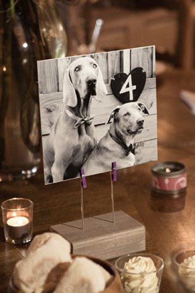 Dog Table Numbers | Dog Wedding Ideas