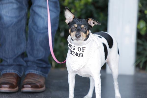 Dog of Honor | Dog Wedding Ideas