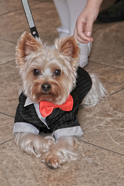 Dog Wedding Outfits | Dog Wedding Ideas
