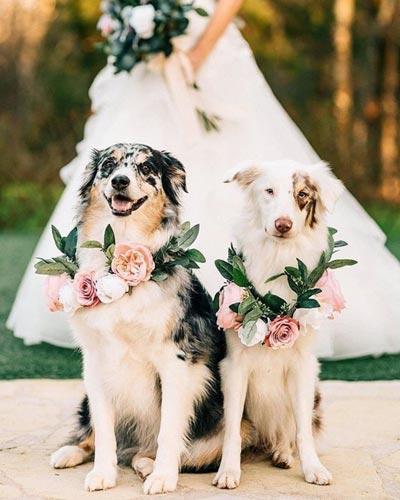 Dog Floral Collar | Dog Wedding Ideas