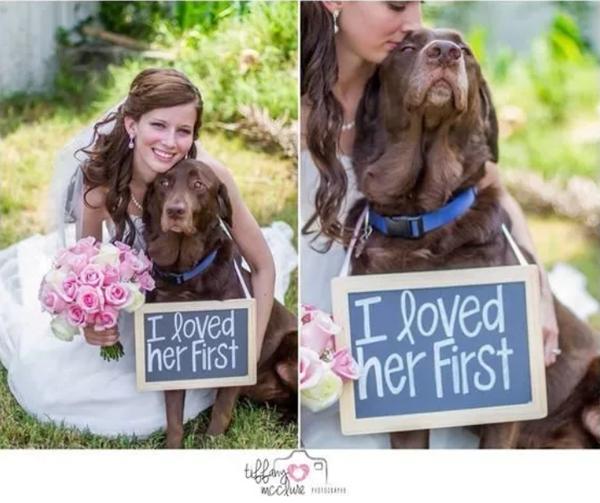 Dog Wedding Signs | Dog Wedding Ideas