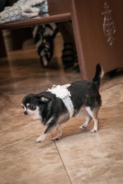 Dog Ring Bearer | Dog Wedding Ideas
