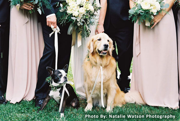 Dog Wedding Ideas for Dog Lovers